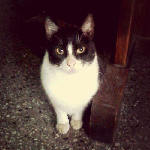 Cute My Lovely Cat Beautiful! Love♡