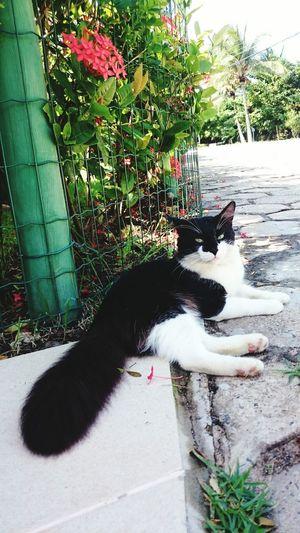 Cats Cats Of EyeEm Cat Lovers Nature Garden Photography