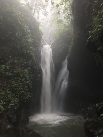 Bali Bali, Indonesia INDONESIA Märchen Balinese Baliphotography Beauty In Nature Day Flowing Water Forest Indonesia_photography Jungle Long Exposure Motion Nature No People Outdoors River Scenics Tree Wasserfall Water Waterfall