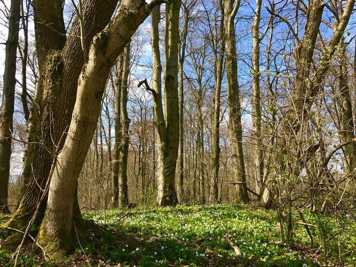 Spring Forest Tree Plant Growth Nature Forest No People Land Day Beauty In Nature Trunk Tree Trunk WoodLand Sunlight Outdoors Green Color Sky Scenics - Nature