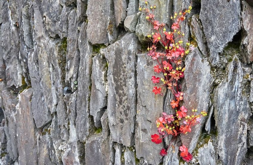 Backgrounds Beauty In Nature Close-up Day Flower Flowering Plant Fragility Full Frame Growth Lichen Nature No People Outdoors Plant Rough Textured  Tree Tree Trunk Trunk Wall - Building Feature Weathered