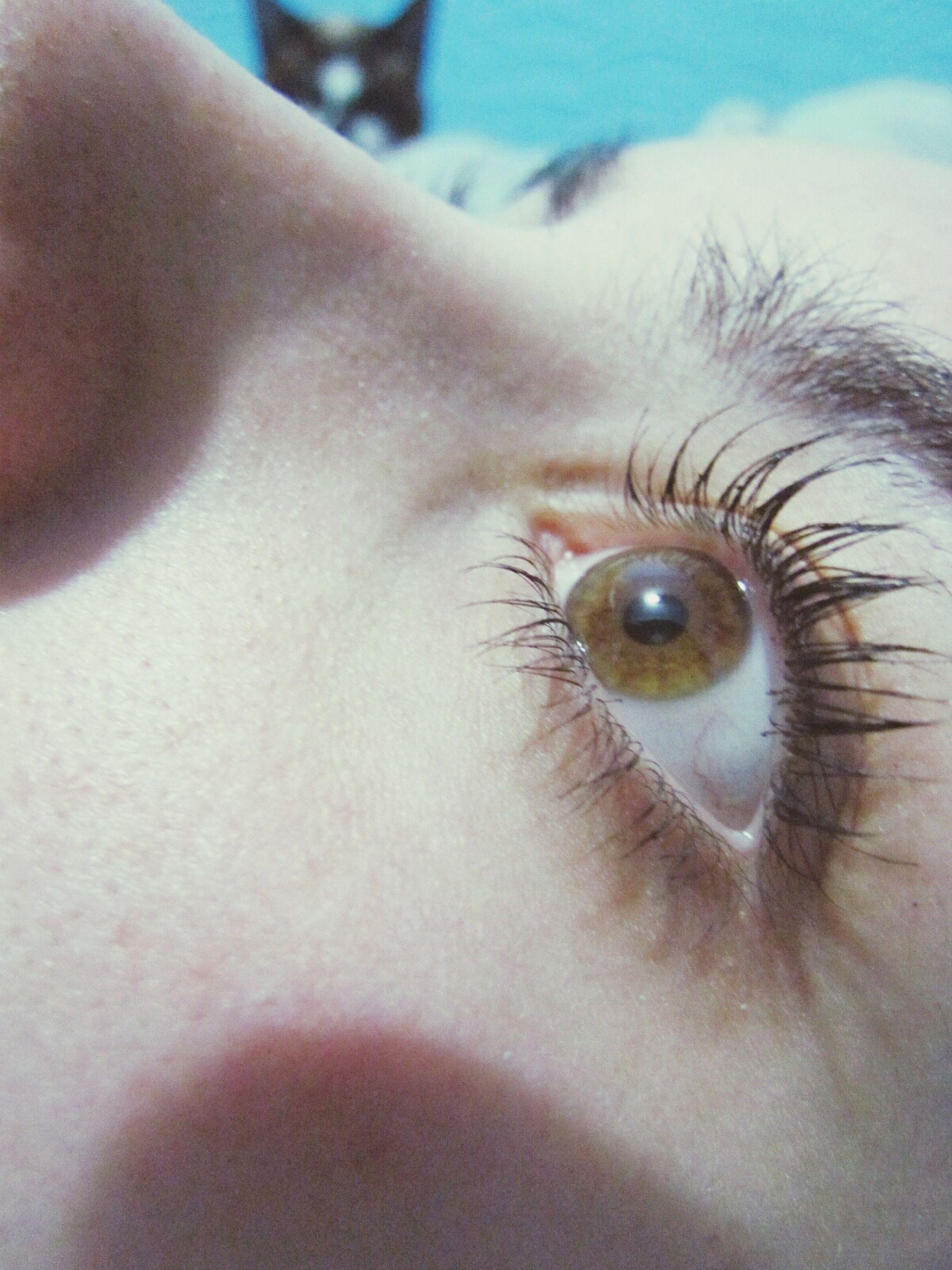 part of, close-up, human skin, one animal, human eye, person, cropped, unrecognizable person, sensory perception, eyelash, eyesight, extreme close up, extreme close-up, animal themes, lifestyles, selective focus