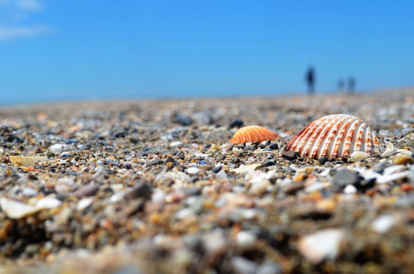 EyeEm Gallery EyeEm Nature Lover Land Selective Focus Nature Beach Day Sand Close-up Sunlight Sky Tranquility Seashell No People Sea Animal Shell Beauty In Nature