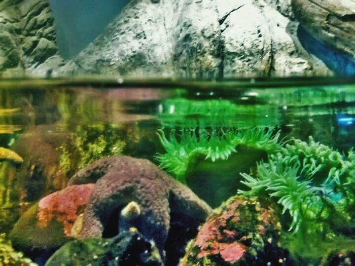 Underwater Rock - Object Water Nature No People Beauty In Nature Aquarium Swimming Sea Life Starfish  Color Photography West Coast USA The Week On Eyem Beauty In Nature Scuba Dive Under The Sea Close-up