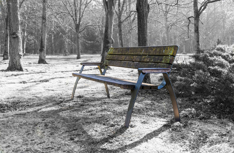 Bench Berlin Berlin Photography Berliner Ansichten Cemetery Cemetery Photography Cemetery_shots Daytime Empty Graveyard Graveyard Beauty Keycolor No People Outdoor Photography Outdoors