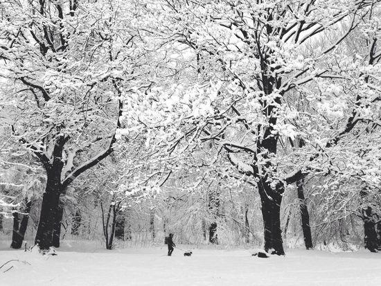 Brooklyn Blizzard ~ Prospect Park 2014 Snow Donfilter EyeEm Best Shots AMPt_community