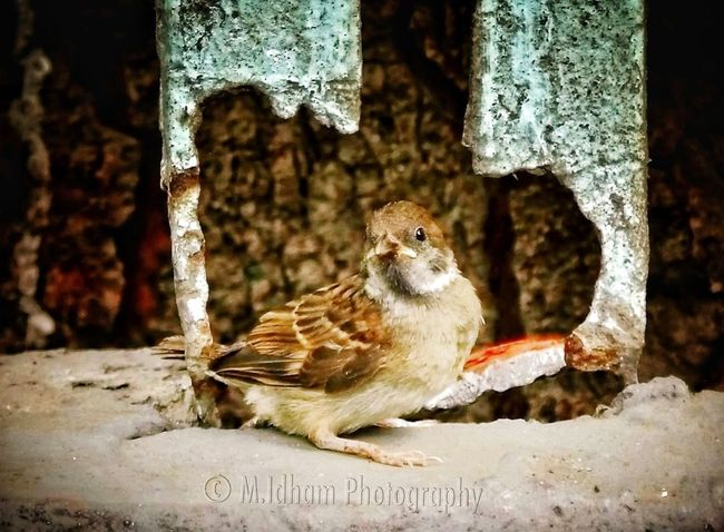 Birds Wildlife EyeEm Best Shots Bird Photography