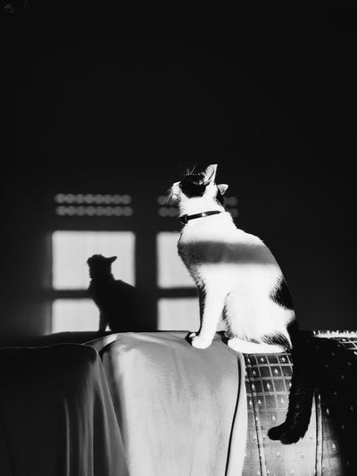 fotossíntese Phonecamera PhonePhotography SamsungGalaxyS8 Light And Shadow Dark Animals Sunset Shadow Sun Light Sky And Clouds Perspective Lines Cutepet Blackandwhite Cateyes Catlovers View Mirror Light Sunny Day Aveiro Pet Cute Posing Close-up Cat Feline Kitten At Home Domestic Cat