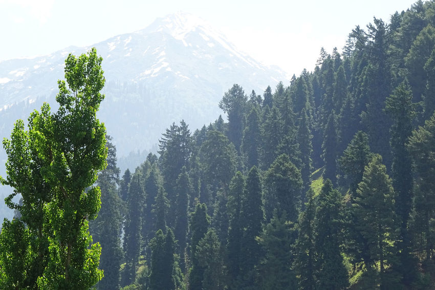 Peaks in valley Beauty In Nature Day EyeEmNewHere Forest Growth Landscape Mountain Nature No People Outdoors Peak Rakeshtiwari Range Scenery Sky Snow Travel Destinations Tree Valley