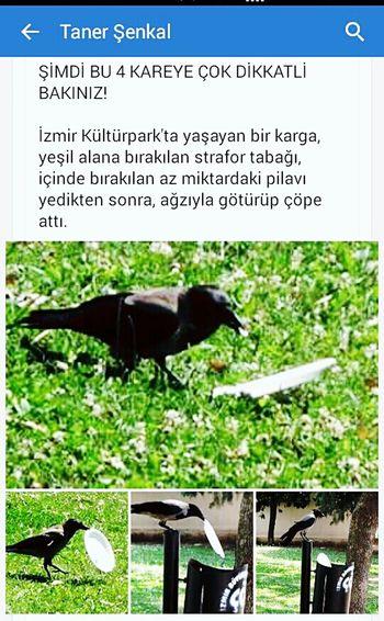 Turkey Izmir Karga Crow Animals Karga kadar olamıyoruz çoğu zaman...