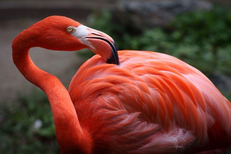 Flamingo No