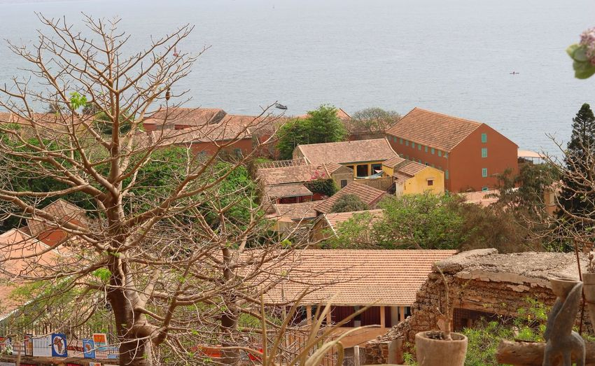 High angle view of houses and trees by sea