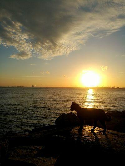 Sunset EyeEm Selects Cat EyeEm Best Shots EyeEm Nature Lover EyeEnOnInstagram Water Sea Sunset Beach Swimming Sea Life Sun UnderSea Sunlight Silhouette