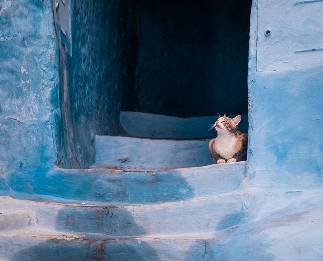 Cat sitting on blue steps