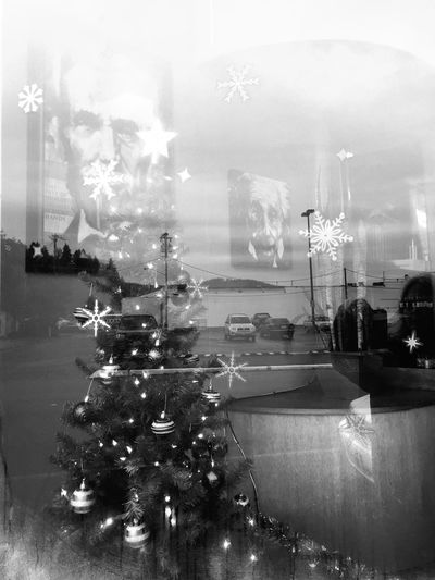 Christmas Tree Black & White Documentary Holidays