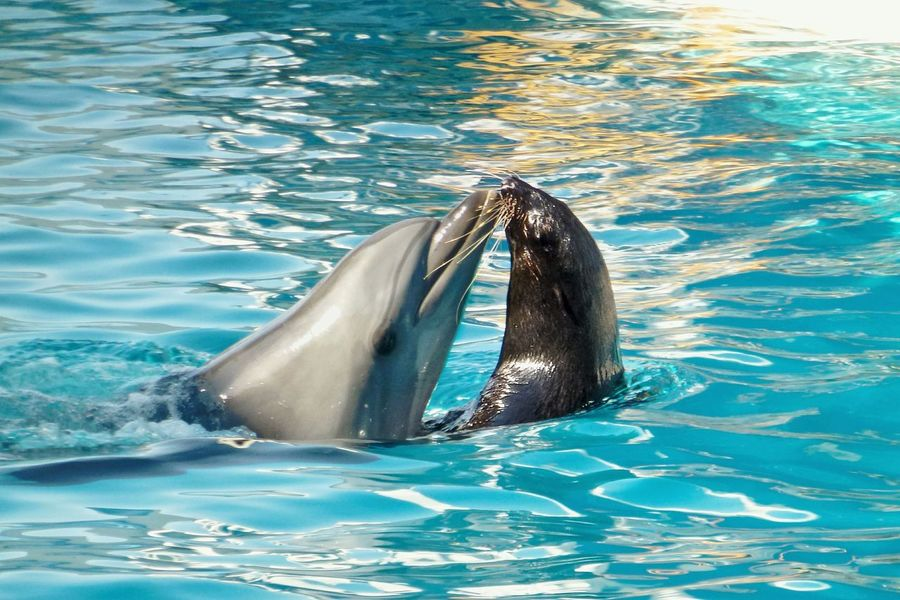 Dolphin Grey Seal Water Day Beautiful Love Swimming Waterfront Nature Mammal Horizontal Animal Themes