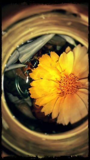 Bouquet In A Bottle Yellow Flower Adrift EyeEm Gallery EyeEm Nature Lover EyeEm Best Edits