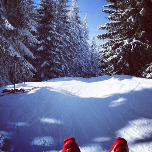 Red shoes on snowy field against trees