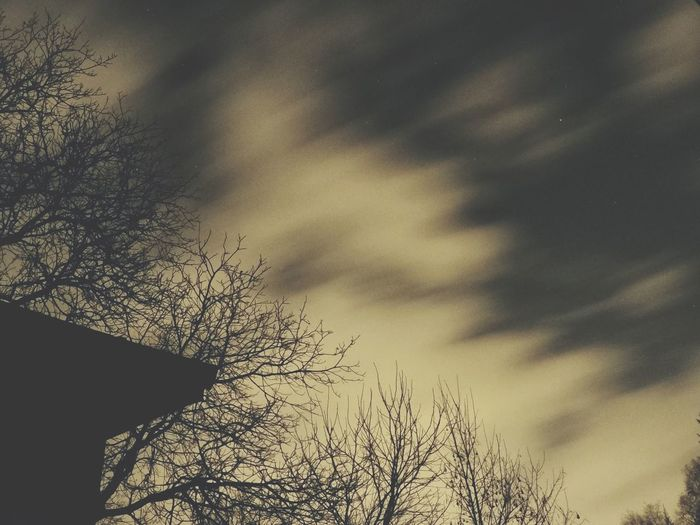 Sky Tree Bare Tree Cloud - Sky Silhouette Nature Low Angle View No People Outdoors Branch Tranquility Beauty In Nature Day