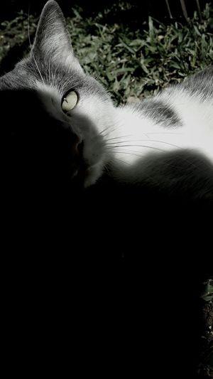 Hey kitty Cat