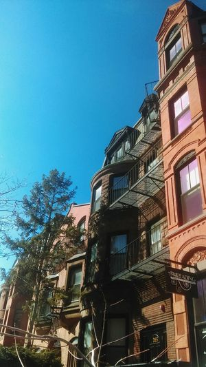 When the sun hits, it hits hard Building Exterior Architecture Blue Built Structure Clear Sky Sky No People Outdoors Low Angle View Day Tree Boston Massachusetts Urban Urban Geometry Urban Landscape