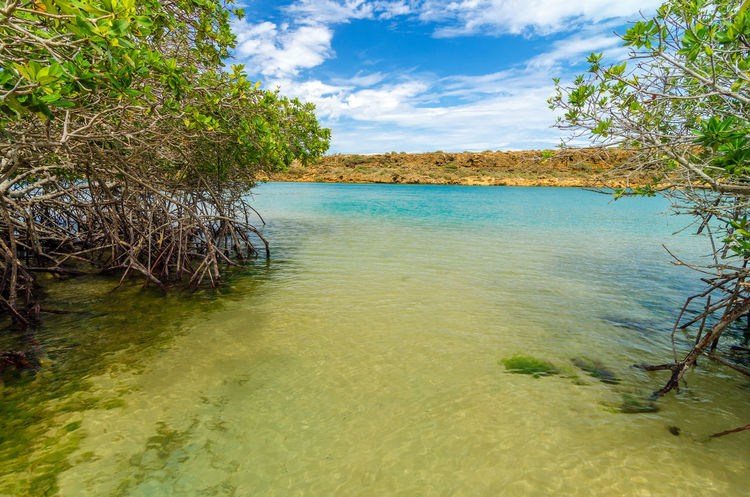 View of mangroves and coastline in La Guajira, Colombia Beach Blue Caribbean Colombia Green Guajira Idyllic La Guajira La Guajira Colombia Landscape Natural Nature Punta Gallinas Sand Sea Seascape Season  Sky Summer Sunlight Sunshine Tranquil Tropical View Water