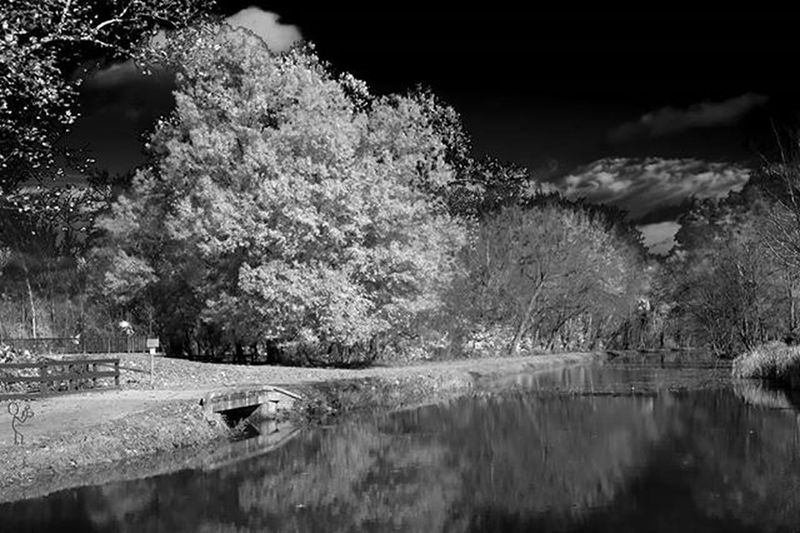 Maryland Park Potomac Potomacriver Infrared Tree River Nature Washington DC WashingtonDC Historic History Water Monochrome Photography