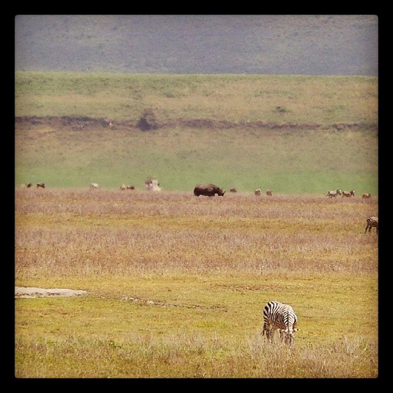 animals in the wild, animal themes, grass, mammal, wildlife, landscape, safari animals, animal, animal wildlife, nature, no people, day, scenics, outdoors, travel destinations, one animal, beauty in nature