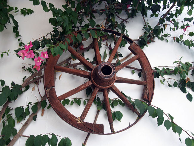 old cartwheel on a white wall in greece Beauty In Nature Broken Wheel Cart Wheel Clock Close-up Day Greece Green Color Growth Indoors  Leaf Nature No People Old-fashioned Plant Time Tree Wheel Wheel