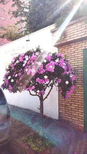 Como a natureza é linda 😍🍃🌸