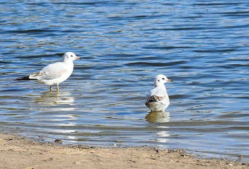 🐦🌅🏊Seagull Lake Autumn Park Sunday Чайки озеро осень парк влксм