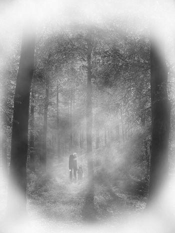 Slenderman edit in Photoshop Dark Forest Halloween Halloween Horrors Horror And Macabre Macabre Slender SlenderMan