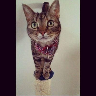 Loveher Lana Cat Beauty ♡