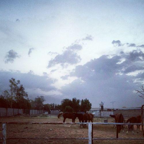 صباح الخير ^_^ لقطه سريعه بستنى بالشمس تطلع بس شكلها مطوله شوي ? Good Morning Horseslovers Club riyadh ksa nature sky blue instanature love clouds quite city beautiful horses ??