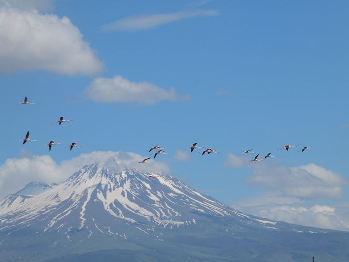 Animal Animal Themes Sky Animals In The Wild Bird Flying Vertebrate Animal Wildlife Group Of Animals Cloud - Sky Beauty In Nature Mountain Winter Large Group Of Animals Snow Cold Temperature Scenics - Nature Nature Day No People Mountain Range Snowcapped Mountain Flock Of Birds Mountain Peak