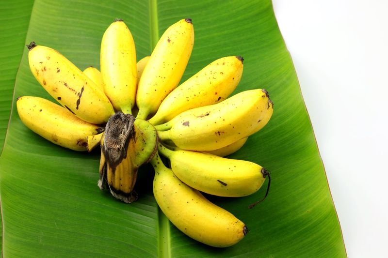 Thai Egg banana Benefits Nutrition Organic Food Type Of Banana Egg Banana Copy Space Banana Fruit Healthy Eating Food Food And Drink Banana Tree Banana Leaf No People Yellow Freshness Green Color Day