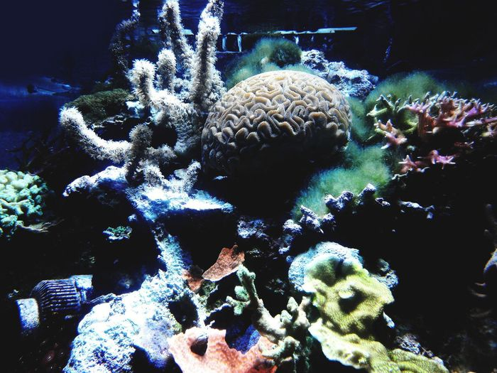 Underwater UnderSea Coral No People Sea Life Close-up Nature Outdoors Beauty In Nature Water Day Photograph Tranquil Scene Scenics Tranquility Aquarium Aqarium Aqautic