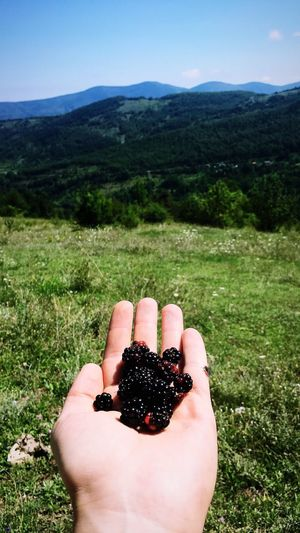 Cropped hand of person holding blackberries on mountain