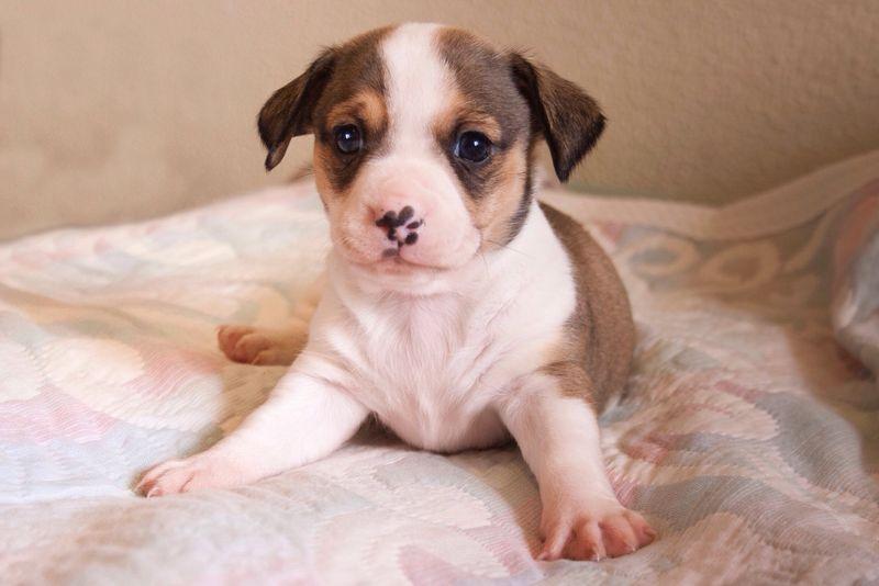 Dog❤ Dog Dog Love Perro Perrito Puppy Love Puppy Cachorro