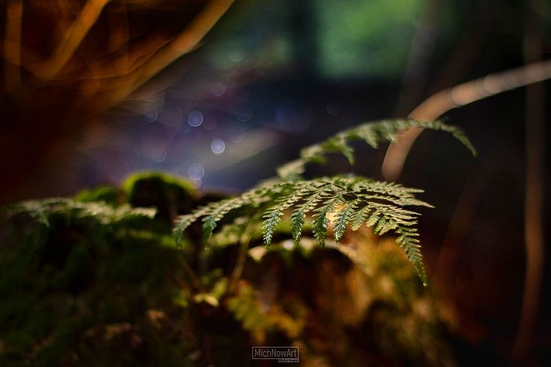 magic forest Macro Canon Bokeh Close-up Growing Young Plant Mushroom Petal Growth Fungus Fern Stalk Plant Life Blooming Pollen In Bloom