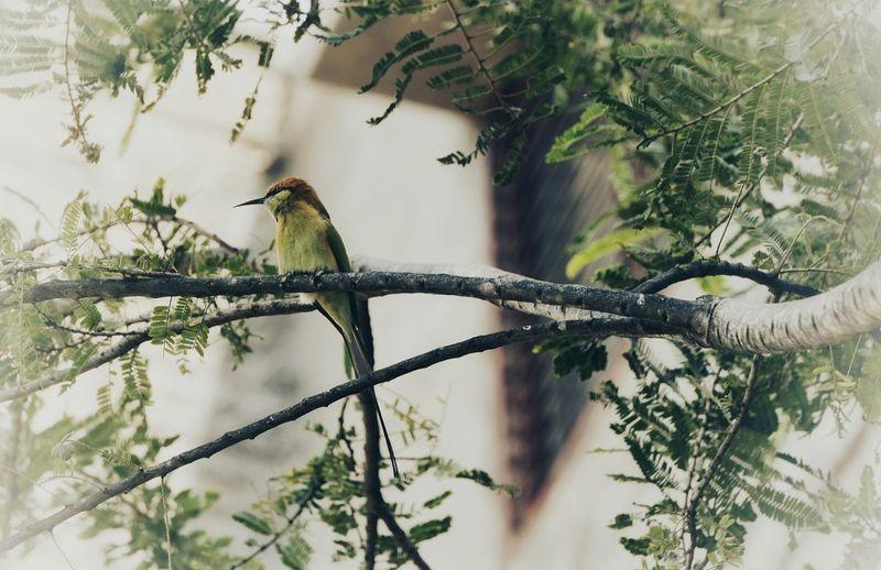 Bird Perching Tree Branch Full Length Trapped Animal Themes Sky