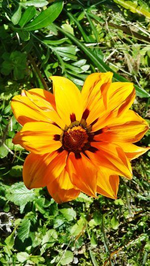 yoldan geçiyordu, durdu.. bir bahçe vardı.. donuk adımlarla, adım-adım bahçenin duvarına yöneldi.. donuk gözlerle çiçeklere baktı, baktı.. çiçekler sıcaktı.. donmuş bir sesle bahçıvana sustu: - bu çiçekler kesilecek mi? bu çiçekler gidecek mi? bahçıvan dizlerine bahçeyi çöktü.. yüzüne çiçekleri döndü.. bir ışık yanmayordu, yandı, söndü.. elleri gözlerine baktı, gözleri ellerine aktı.. gözleri ellerini gördü.. elleri kördü.. sönen ışık yandı.. yanan ışık söndü.. dün yağmur yağacaktı, gün döndü, yarın yağdı, bugün dindi.. ağlayacaktı.. kim anlayacaktı...Özdemir Asaf Nature_collection Getting In Touch Nature Photography Ineedamiracleformylostsoul Flowerporn Flowers,Plants & Garden Beeandflower Macro_collection