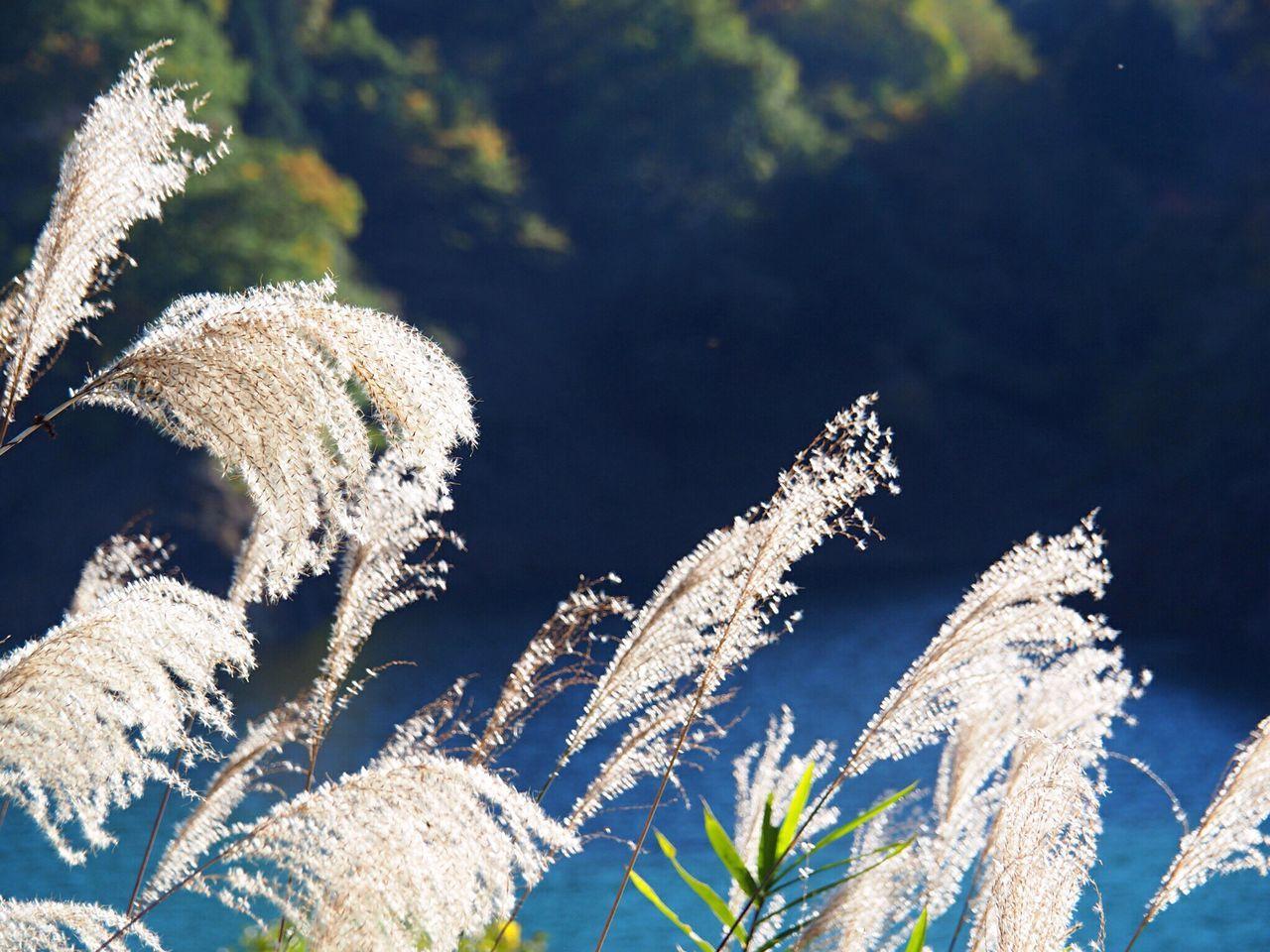 Close-Up Of Tall Grass Outdoors