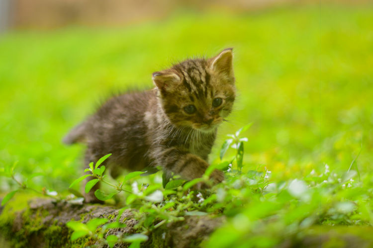 New baby kitten Cats Of EyeEm EyeEm Best Shots Animal Animal Themes Cat Domestic Domestic Animals Domestic Cat Feline Grass Green Color Kitten Looking At Camera Mammal Nature No People One Animal Outdoors Pets Plant Portrait Selective Focus Sitting Whisker Young Animal