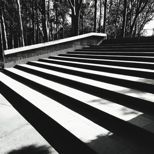 Outdoors Day Tree Shadow No People Close-up Nature Shadowplay Staircase Stairs Stairporn Staircase Perspective Stairshadow Blackandwhite Check This Out EyeEm Gallery Blacklover Motog5plus Moto G Shot The Architect - 2017 EyeEm Awards The Street Photographer - 2017 EyeEm Awards Welcome To Black Architecture Shadows & Lights Patterns & Textures The Week On EyeEm Black And White Friday The Architect - 2018 EyeEm Awards