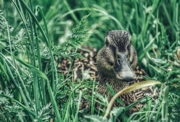 Close-up of duck amidst plants