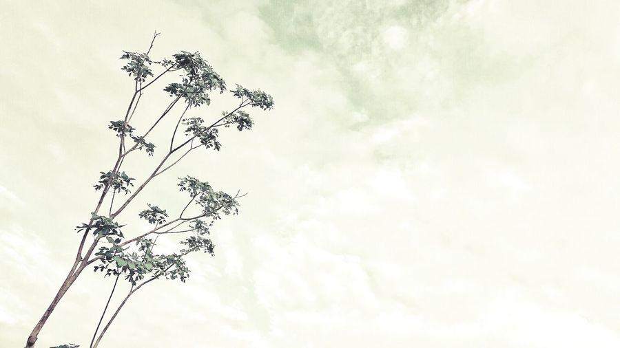 臺北 台北 西門 西本願寺 天空 樹 雲 Cloud Clouds Sky Tree クラウド 晴れました 나우 하늘
