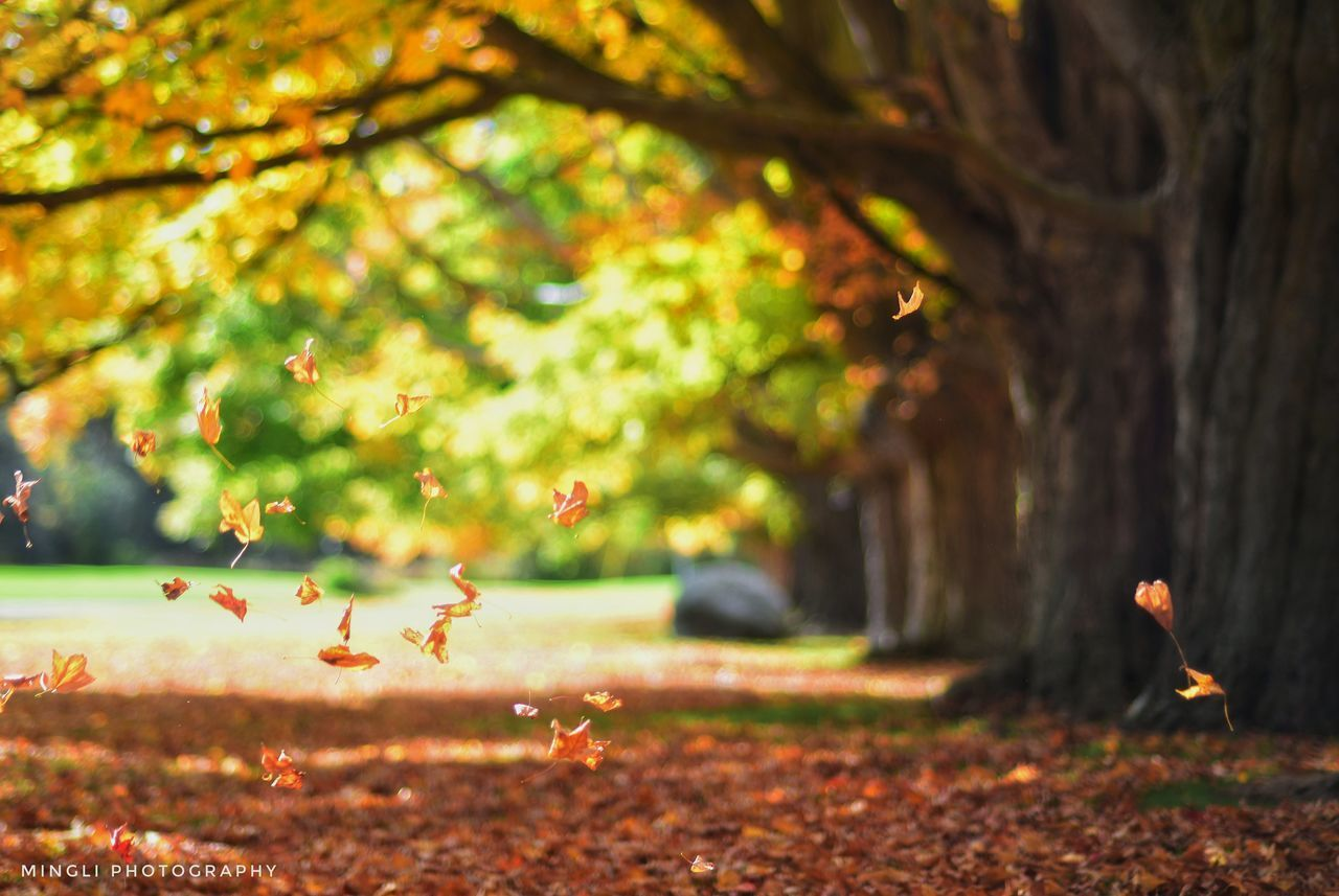 tree, plant, nature, land, focus on foreground, autumn, beauty in nature, day, park, selective focus, change, no people, leaf, growth, outdoors, plant part, park - man made space, field, bird, forest