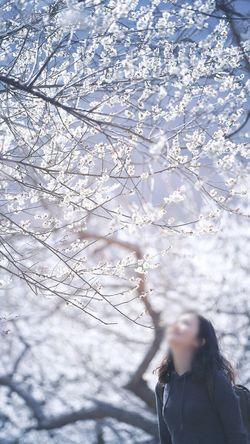 Japanese Apricot Blossoms Flowers Gwangyang Japanese Apricot 광양에 다녀왔어요