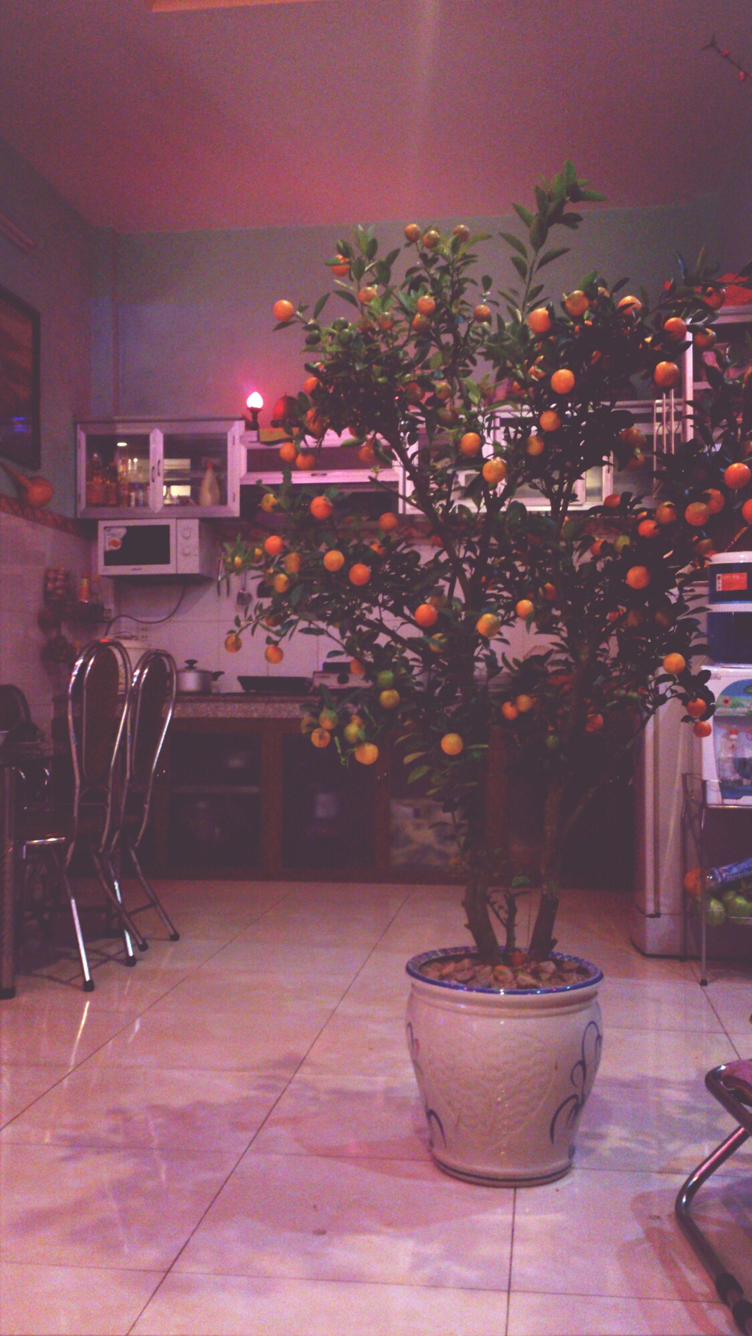 table, illuminated, chair, potted plant, architecture, indoors, built structure, absence, plant, empty, lighting equipment, growth, night, house, building exterior, restaurant, no people, flower, flower pot, vase